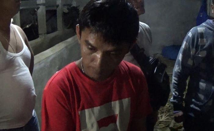 Bandar narkoba di Padang ditangkap di kandang sapi, Minggu (23/2/2020) (Foto: iNews/Budi Sunandar)