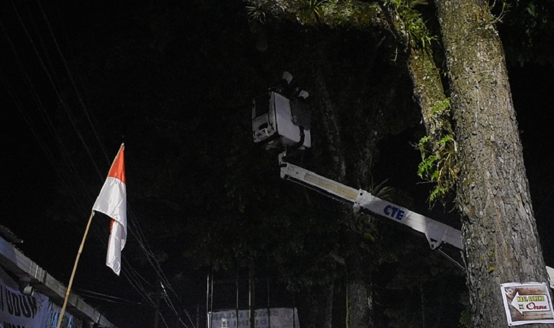 Petugas PMI mengevakuasi sarang tawon di pohon yang meresahkan warga. (iNews.id/Wahyu Sikumbang)