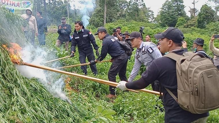 Pemusnahan 10 hektare ladang ganja siap panen di di Desa Pulo, Lamteuba, Kecamatan Seulimeum, Aceh Besar. (Foto: ist)