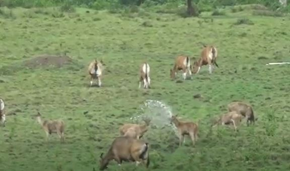 Beragam hewan hidup menyatu di kawasan Alas Purwo, Banyuwangi yang terkenal angker. (Foto: MNC Portal/Eris Utomo)