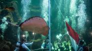 Penyelam Gelar Upacara HUT RI di Kolam Raksasa Sea World Ancol