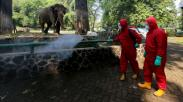 Jelang Dibuka 20 Juni, Taman Margasatwa Ragunan Disemprot Disinfektan
