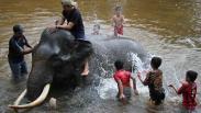 Serunya Memandikan Gajah Jinak di Kawasan Konservasi Aceh