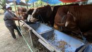 Dampak Covid-19, Penjualan Hewan Kurban di Kampung Makassar Menurun