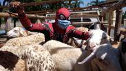 Aksi Spiderman Salurkan Hewan Kurban untuk Anak-Anak Pengidap HIV/AIDS