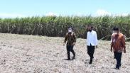 Presiden Jokowi Resmikan Pabrik Gula di Sulawesi Tenggara