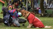 Anjing Jenis Golden Retriever Ini Dilatih agar Mematuhi Protokol Kesehatan