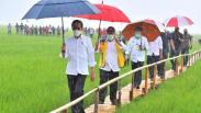 Hujan Lebat, Presiden Jokowi Pakai Payung di Tengah Sawah saat Tinjau Lumbung Pangan