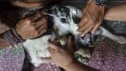 Pasangan Suami Istri Ini Tampung Puluhan Kucing Sakit, Dirawat hingga Sembuh
