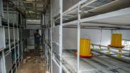 Penampakan Apartemen Ayam 4.0 di Desa Cibodas, Tampung 5.000 Ekor Hewan Ternak