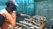 Budi Daya Maggot Hasilkan Pupuk dan Pakan Ternak, Dijual Rp33.000 per Kilogram