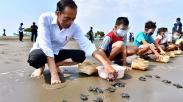 Copot Sepatu, Presiden Jokowi Melepas Tukik di Pantai Kemiren Cilacap