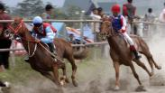 Serunya Melihat Pacuan Kuda Tradisional Gayo