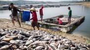 Ratusan Ton Ikan di Waduk Kedung Ombo Sragen Mati