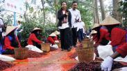 Menteri BUMN Dorong Produksi Kopi Arabika karena Diminati Pasar Luar Negeri