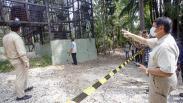 PSO Arsari, Pusat Suaka untuk Orangutan di Kalimantan Timur