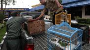 Ratusan Burung Cucak Hijau Diselundupkan Lewat Kapal Kargo