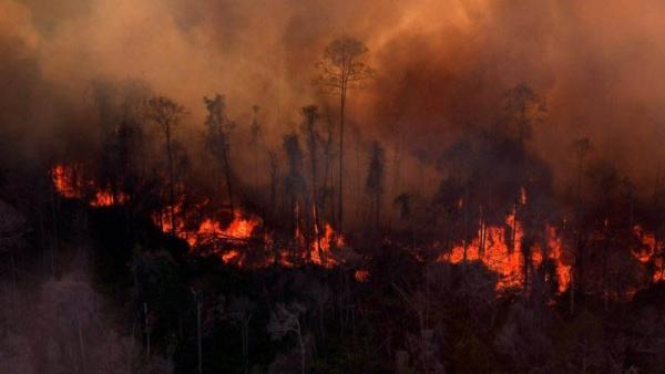 Cagar Alam Habitat Komodo di Pulau Flores Terbakar