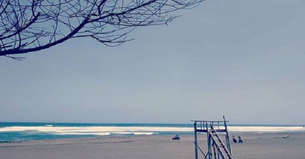 Wisata Yogya Asyiknya Ke Pantai Cemara Sewu Ada Lorong Pepohonan Instagramable