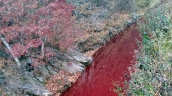 Sungai di Korsel Memerah Tercemar Darah Bangkai Babi yang Dibunuh demi Cegah Penyebaran Virus