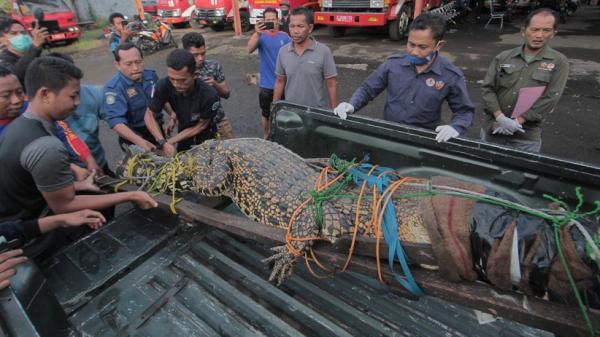 Mancing di Sungai, Nelayan Asal Banyuasin Tewas Diserang Buaya