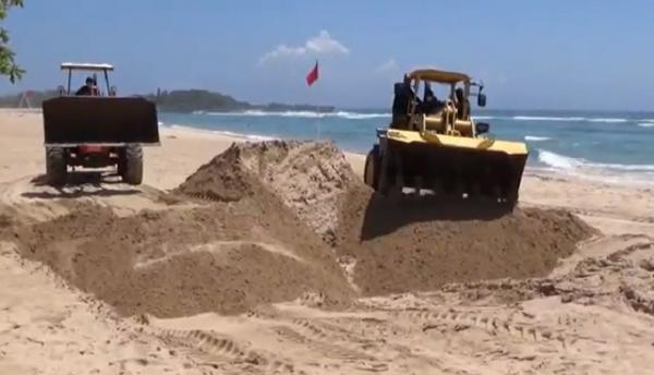 Paus Sperma yang Terdampar di Bali Akan Dikubur di Pantai