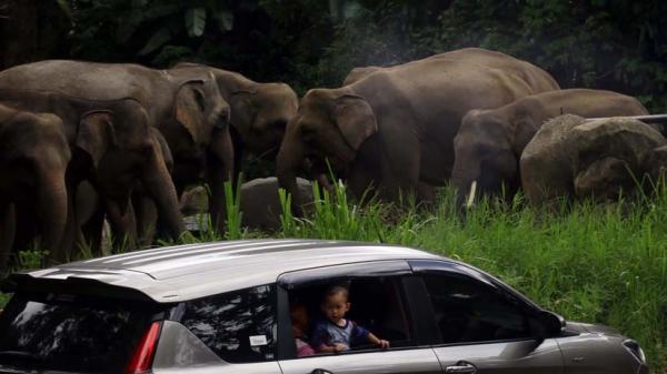 Wisata Taman Safari Indonesia, Kapasitas Pengunjung 50 Persen