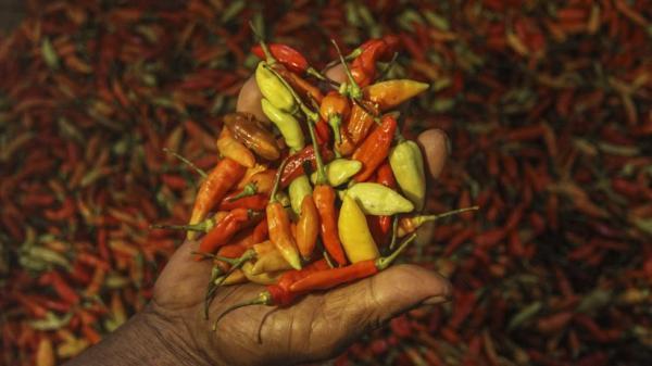 Harga Cabai Rawit di Kota Tegal Tak Kunjung Turun, Pedagang Kelimpungan