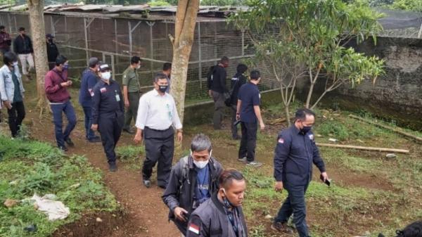 Bareskrim Bongkar Peredaran Satwa Dilindungi di Sukabumi, Ratusan Burung Disita