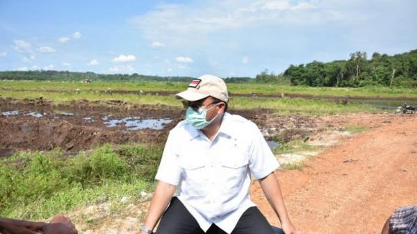 Gubernur Erzaldi Tinjau Ratusan Hektare Lahan Sawah Keracunan di Bangka Selatan