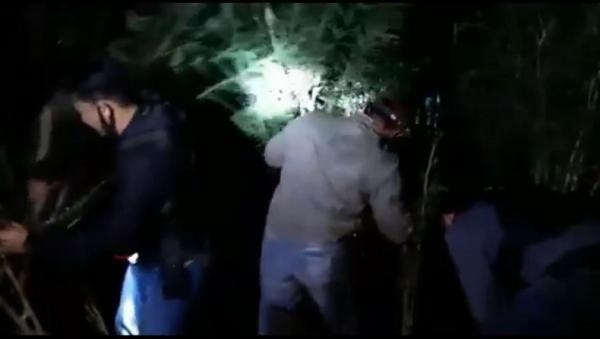 Nekat Tanam Ganja untuk Diperjualbelikan, Petani di Rejang Lebong Diringkus Polisi