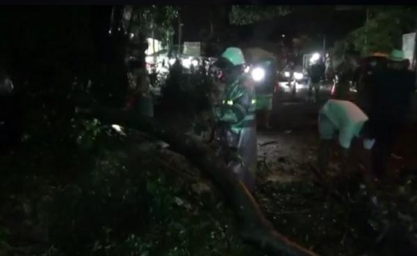 Pohon Keramat Berusia Ratusan Tahun di Bali Roboh Menimpa Mobil dan Warung
