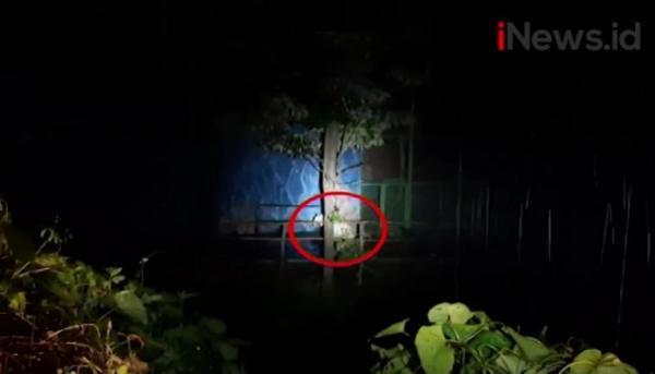 Video 2 Harimau Lepas di Kebun Binatang Sinka Zoo Singkawang, Penjaga Tewas Diterkam