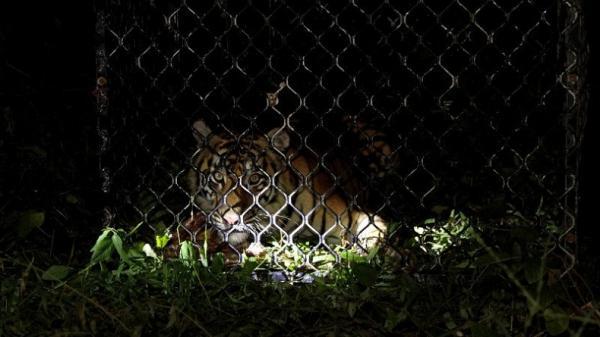 Hutan Bener Meriah Jadi Sasaran Perburuan Satwa Langka, Wabup Berang
