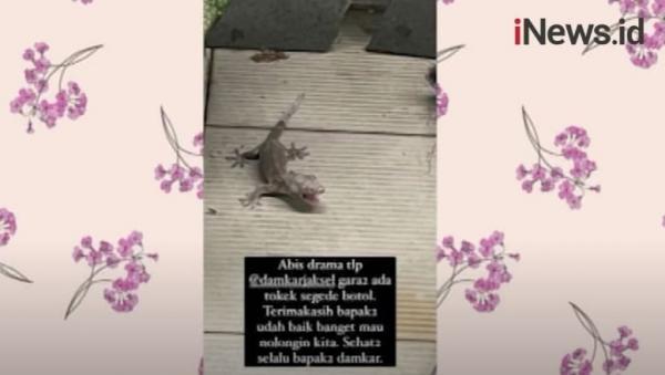 Istri Arya Saloka Diganggu Tokek, Petugas Damkar Sampai Turun Tangan