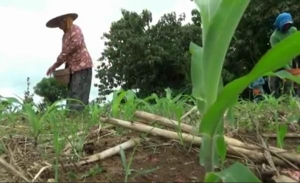 Warga Kampung Miliarder di Tuban Mulai Takut Kehilangan Mata Pencaharian