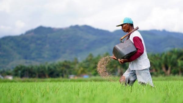 Riau Ingin Punya Food Estate, Siapkan Lahan 30.000 Hektare