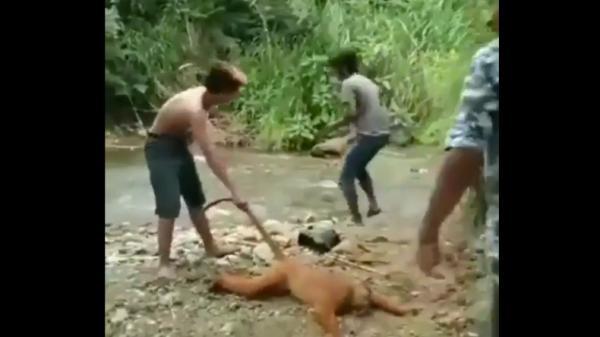 Fakta Video Diduga 3 Pemuda di Sumbar Siksa Simpai di Tepi Sungai