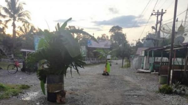 Aksi Kecewa Warga Nagan Raya Tanam Pohon di Jalan Rusak, Ini Kata Kepala PUPR