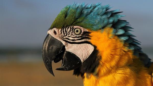 7 Mukjizat Nabi Isa as dalam Al Qur'an, Dari Kitab Injil hingga Menciptakan Burung