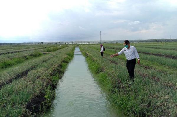 Adopsi Sistem Surjan, Petani Kulonprogo Sukses Kembangkan Mina Bawang