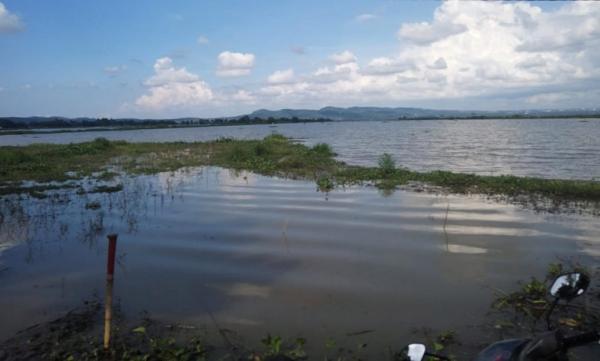 Danau Rawa Pening Meluap, Puluhan Hektare Sawah Terendam Air