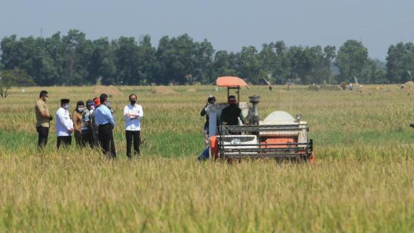 Presiden Jokowi Akan Pantau Stabilitas Harga Pertanian di Malang