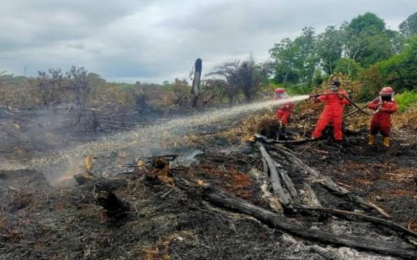 Siap-Siap, CCTV Canggih Bakal Dipasang untuk Tangkap Pelaku Pembakar Hutan