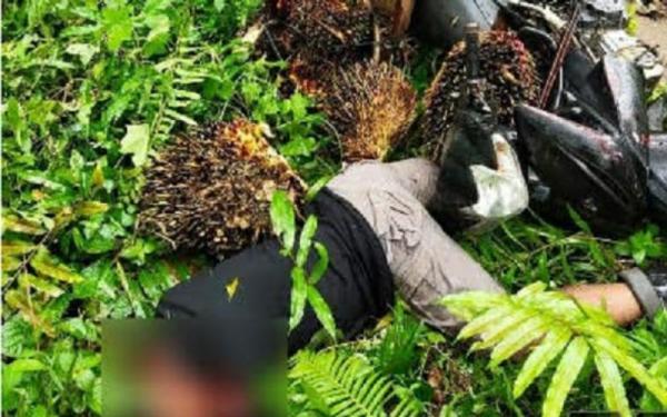 Pembunuhan di Kebun Sawit, Pemuda Tewas dengan Luka di Leher dan Wajah