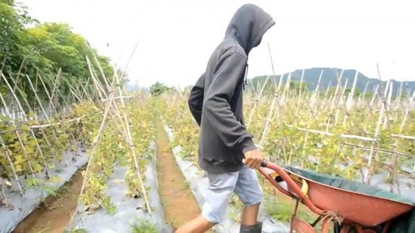 Petani Melon di Aceh Raup Untung di Masa Pandemi Covid-19