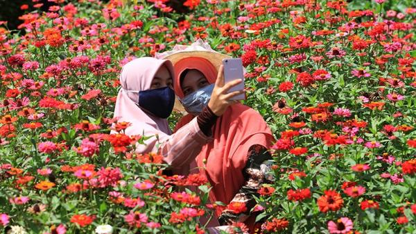Wisata Taman Bunga Mulai Bangkit di Tengah Pandemi