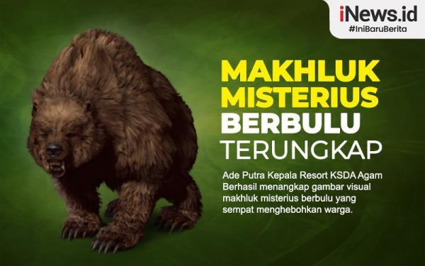 Infografis Makhluk Misterius Berbulu yang Teror Warga Agam