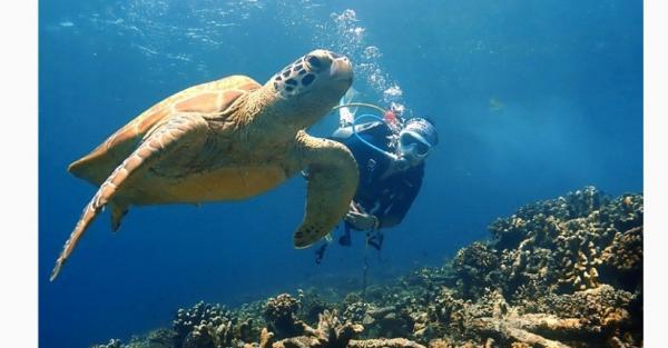 5 Ide Spot Diving Terindah di Indonesia, Nomor 4 Bisa Lihat Biota Laut Langka