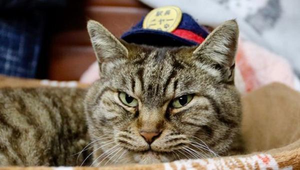Kucing Jabat Kepala Stasiun di Jepang Mati Ditabrak Mobil, Penduduk Kota Berduka